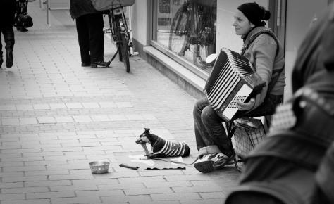 Sie spielt für Ihren Hund...
